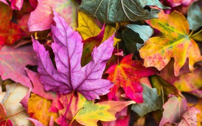 5 ideas for a beautiful Autumn Naming Ceremony
